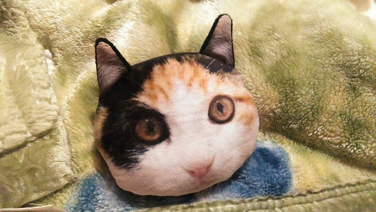 test ツイッターメディア - ふーちゃんにそっくりなので、#セリア で衝動買いしてしまいました。とりあえず、お祓い用の塗香と焼き塩と精麻を入れてます。 #風水 #怪談 #お祓い #三毛猫 #猫好き #長毛種猫 #スコティッシュフォールドミックス https://t.co/muhjfBGo1S