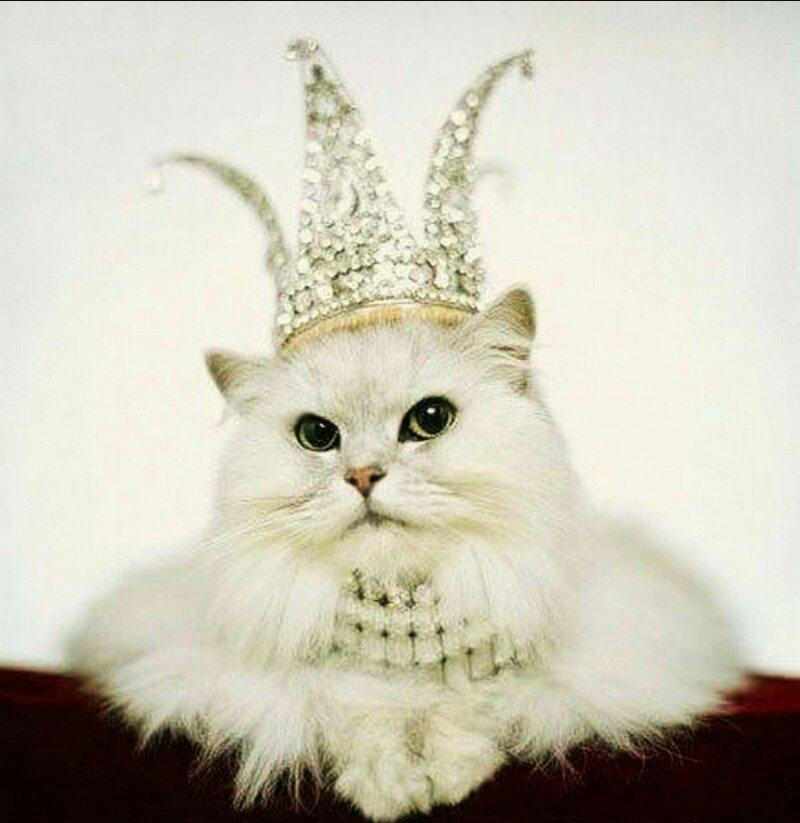 королева кошка картинки меню