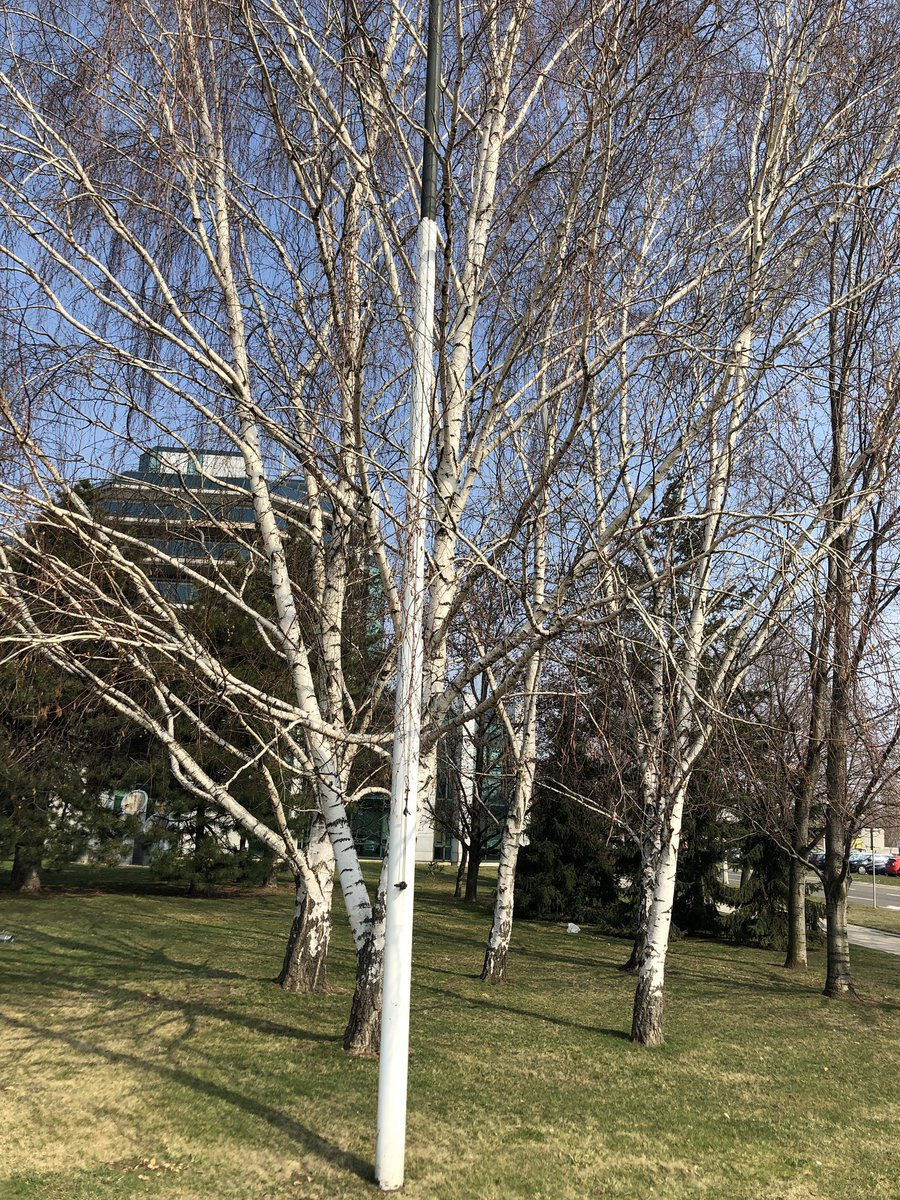 Breze u našem parku. #springiscoming #offices #nbgp https://t.co/TWCZvncD7O