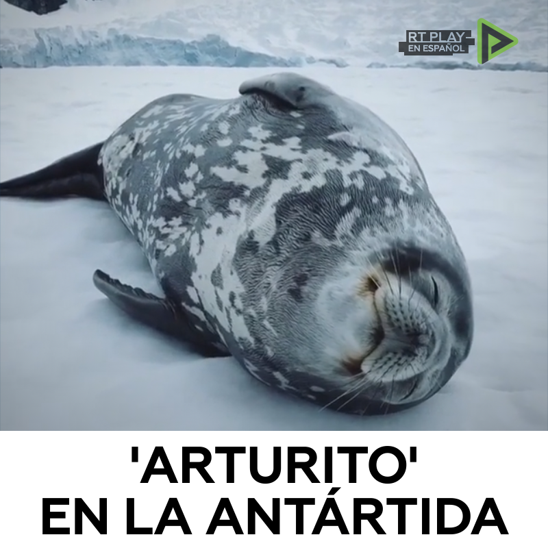 RT @ActualidadRT: Un fotógrafo de una expedición polar captó como 'canta' una foca en la Antártida https://t.co/qLpEsSvi6A