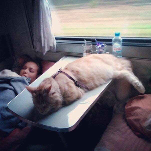 Веселые картинки в поездах, заказ беларусь картинки