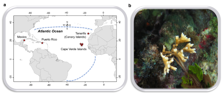 New study on the biogeography of #Symbiodiniaceae associating with my sworn enemy, fire corals. Congrats, @DanniseRuiz!  https://bit.ly/2Vu0MX3