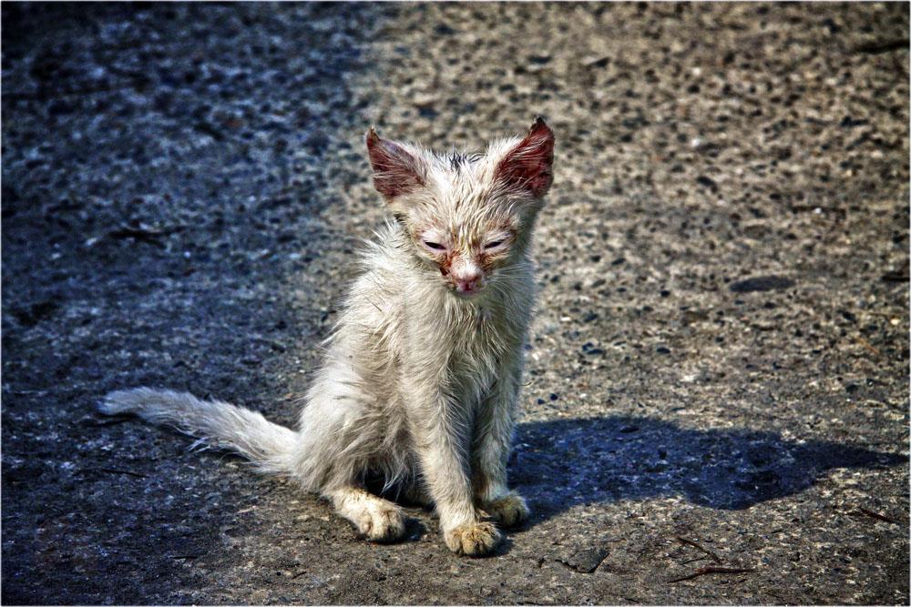 Картинка брошенная кошка