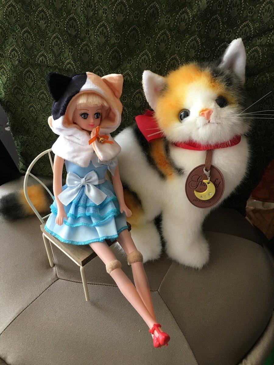 test ツイッターメディア - #ねこさんのケープ3 のガチャついに発見! 三毛猫が好きなのでスゴイ嬉しい❣️  #ぬいぐるみ #ねこさんのケープ #ラブリーリンちゃん #100均ドール  #キャンドゥ  #ドールカスタム  #うちのこかわいい  #うちの子かわいい  #うちのこに癒され24時間 #ドールオーナーさんと繋がりたい https://t.co/888ZP6D1Or