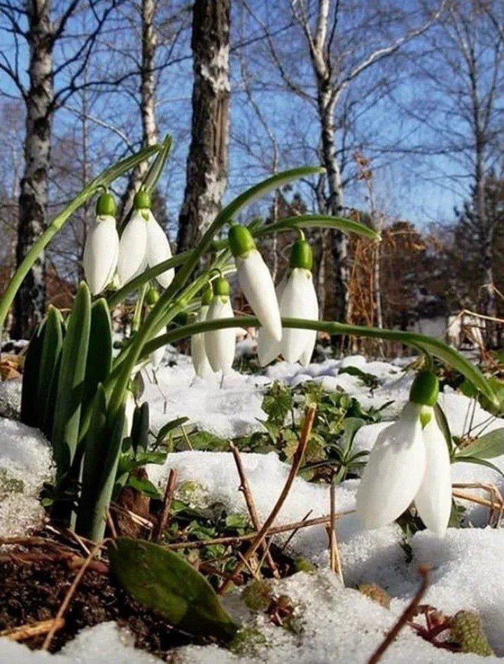 сицилии фото на тему весна природа необходимы высокие