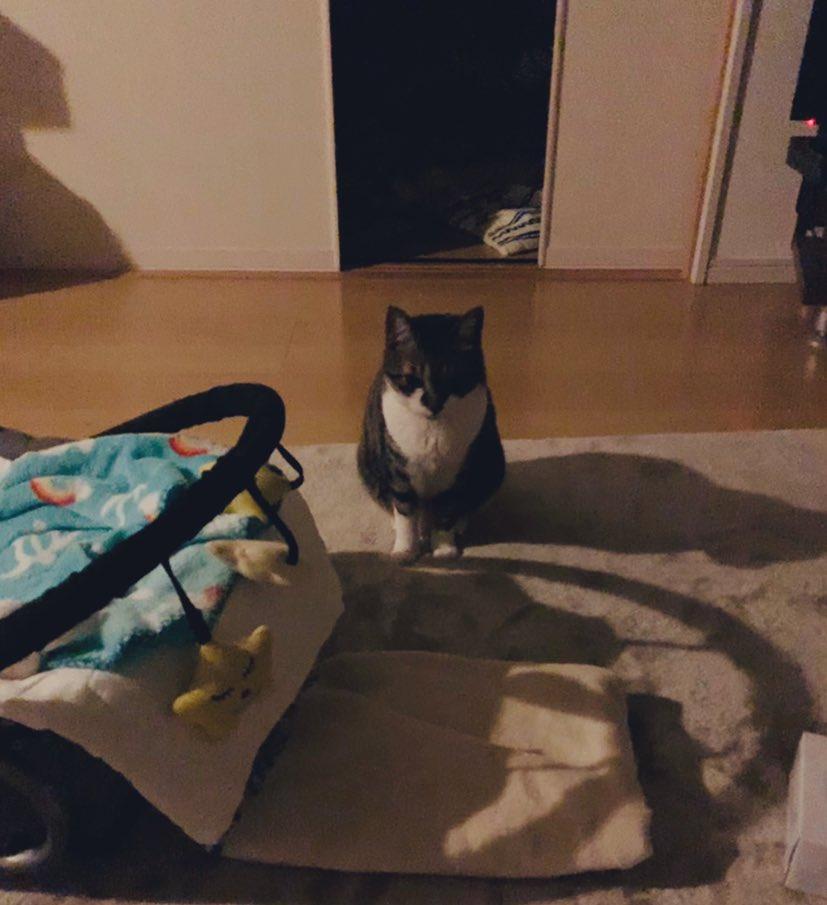 夜中の授乳で夫が寝室から出てきたことは一度もないけど、毎回欠かさず猫は出てきてくれて見守っててくれる😂眠いだろうにありがとね〜〜