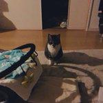 夜中の授乳の度に見に来てくれる飼い猫!ありがとうね??