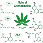 There is more to phytocannabinoids than just CBD!  CBN is the portion that promotes restful sleep and bone density, and may even stop convulsions!  #CountryVitamins #Hemp #Cannabis #Phytocannabinoids #CBD #CBN #Sleep #Rest #Relaxation #BoneStrength #BoneHealth #SleepHealth