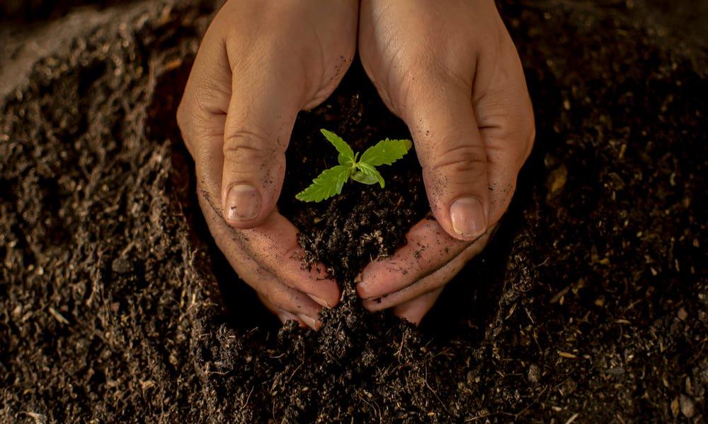 Марихуаны почва это семена конопляные кунжут