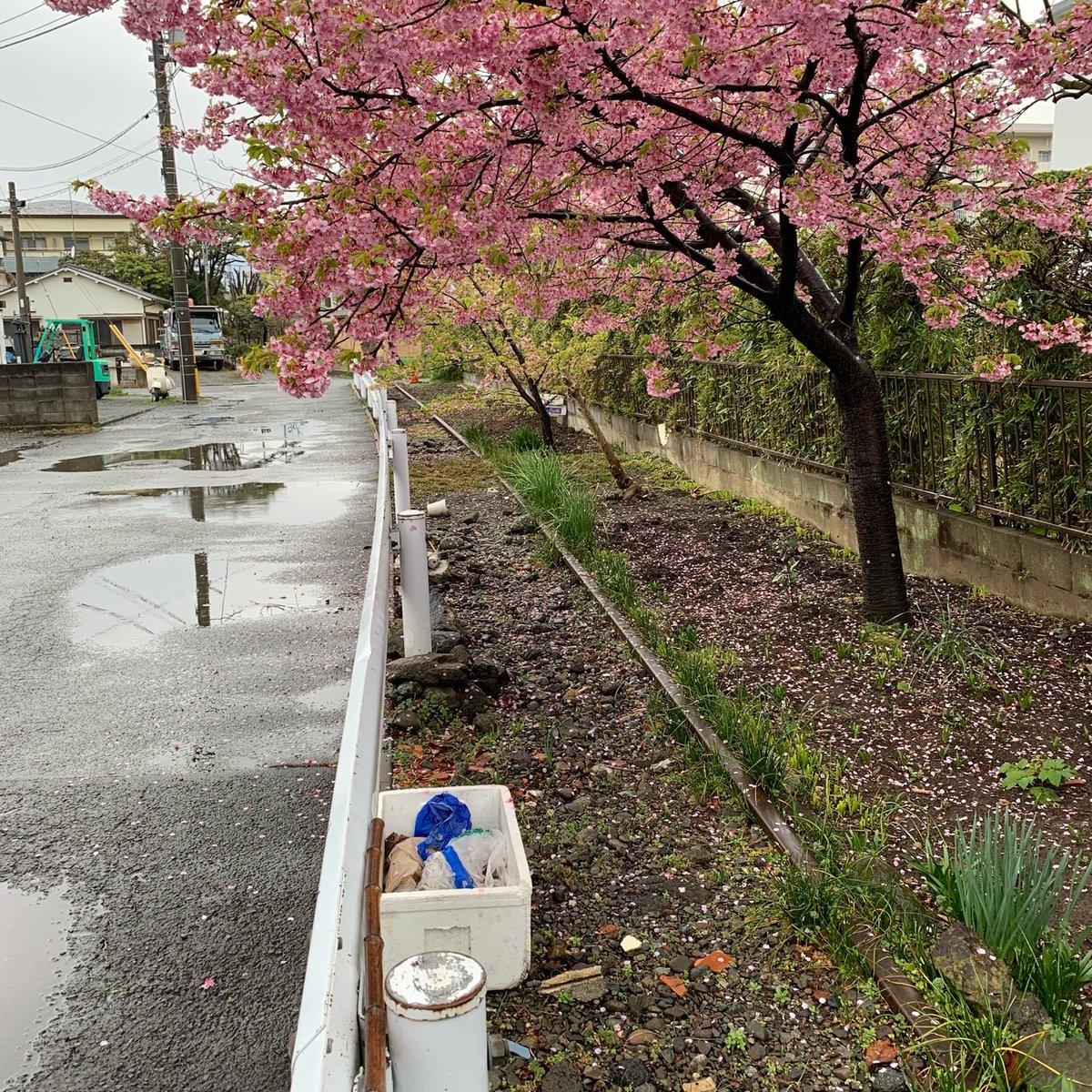 蛇松緑道(河津桜)
