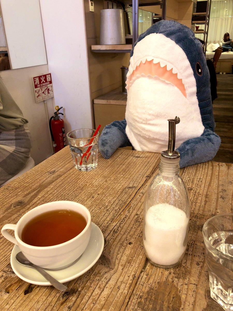 持て余したサメを向かいに座らせてたら店員さんがお水置いてくれた