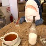 持て余したサメを向かいの席に置いたら店員さんがお水をくれました!なんとやさしい世界!
