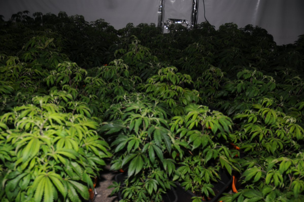 Crime Roundup: Nine arrests after 800 cannabis plants seized in Dublin and Wexford