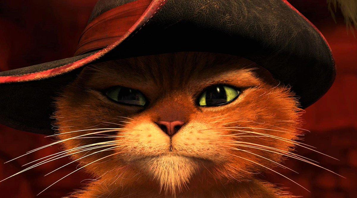 Картинка кот в шреке