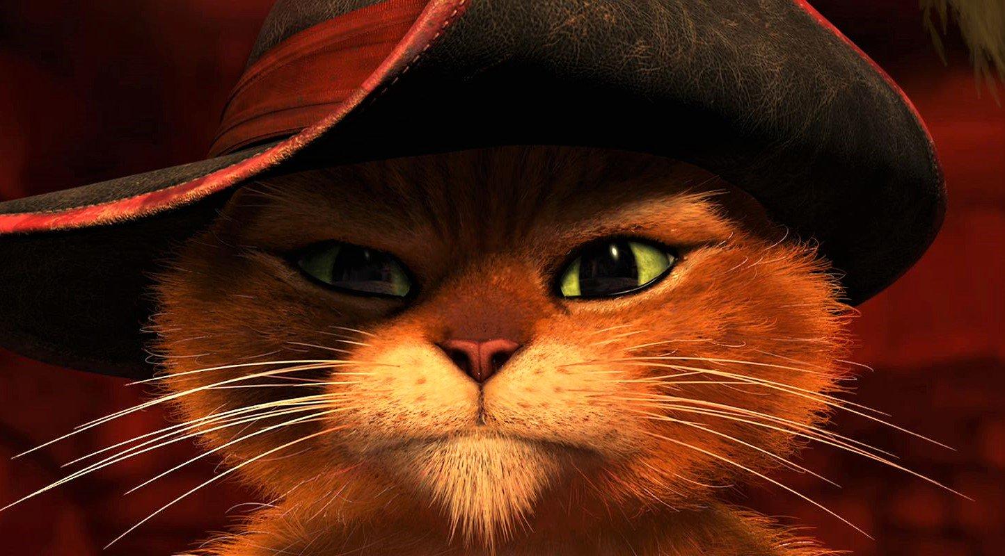 Сделать, кот из шрека картинка прикольная