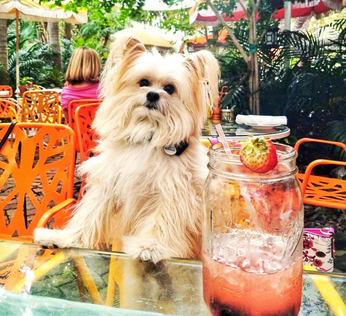 Even pups LOVE our brunch!🐶😍 #Brunch #SundayBrunch #DogsofInstagram #SundayFunday #FurryFriendsWelcome #PupsWhoBrunch #PeacockGardenBistro