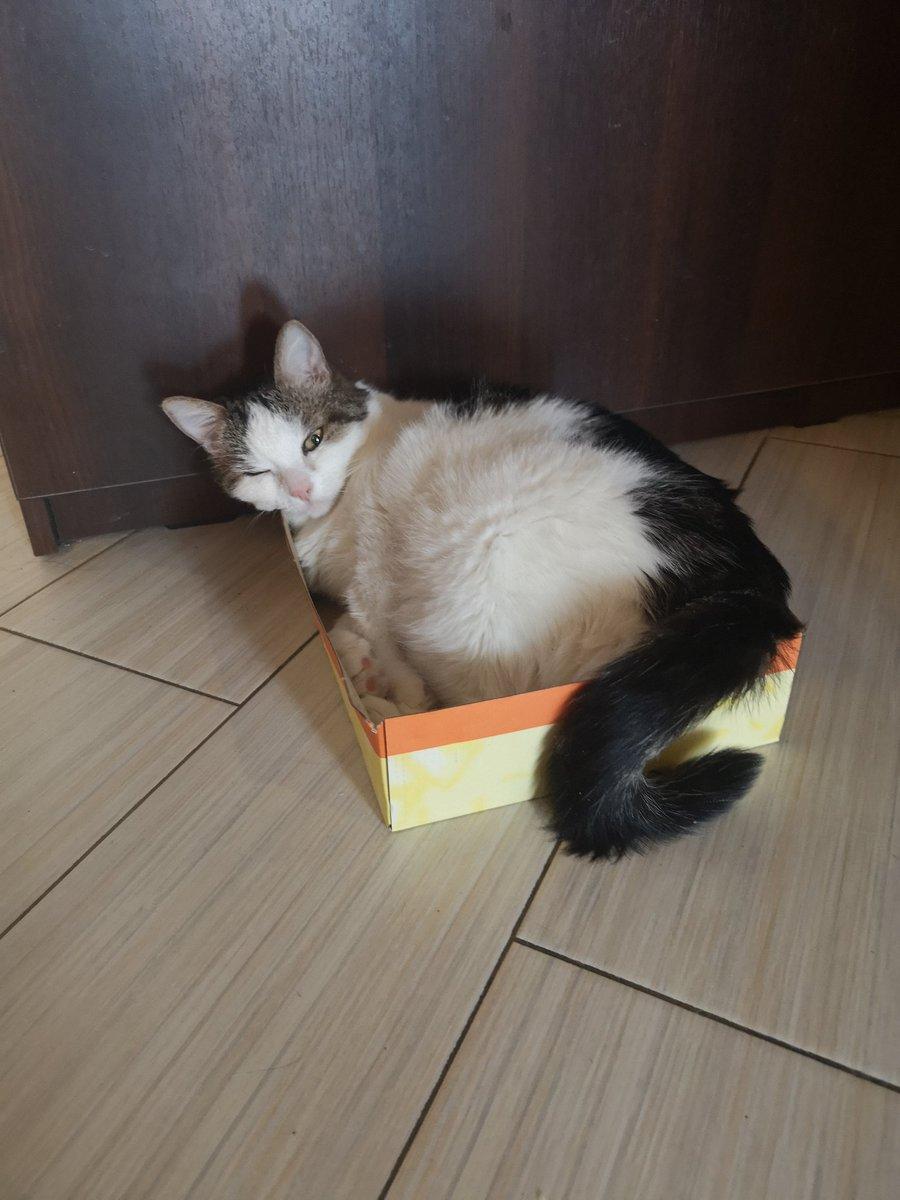 Кошка Резко Похудела Причины. Почему кошка стала худеть, если ест плохо или хорошо, что это может быть: причины потери веса