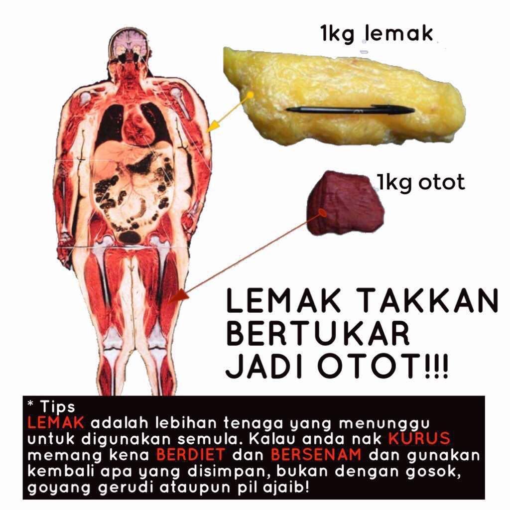 Why susah nak lose weight? Sbb you tak banyak lemak nak kena buang pun. Cuma kalau jaga makan & exercise ni, dia add muscles and burn fats yg sikit2 tu.   Rujuk gambar ni, saiz 1kg lemak vs 1 kg otot. Thats why kalau salah diet, badan menggelebeh. Sbb less muscles than fats https://t.co/fdy6e33rq1