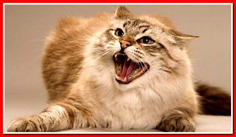 картинка кота бесите этой картине
