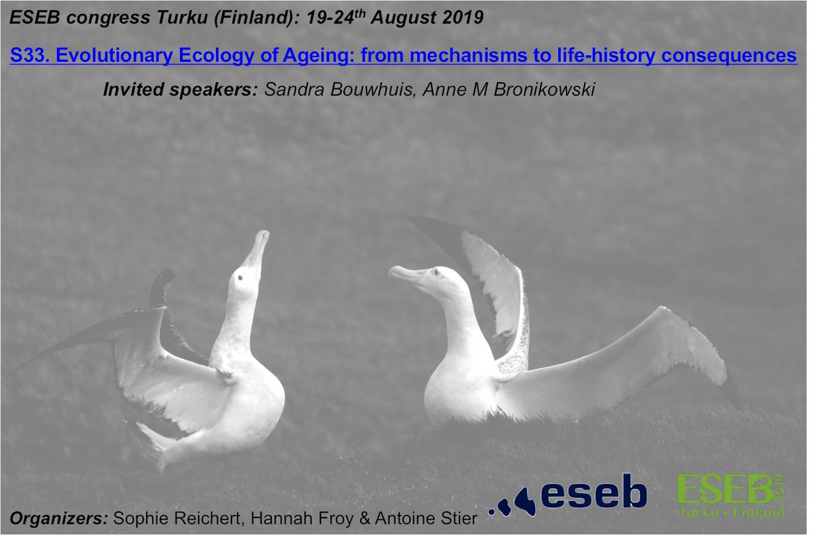 Interested in ageing but in an eco-evolutionary perspective? Please join us at @ESEB2019 for the symposium S33 Evolutionary Ecology of Ageing: from mechanisms   to life-history consequences, with two amazing invited speakers:  Sandra  Bouwhuis & Anne M Bronikowski (deadline 31/3)