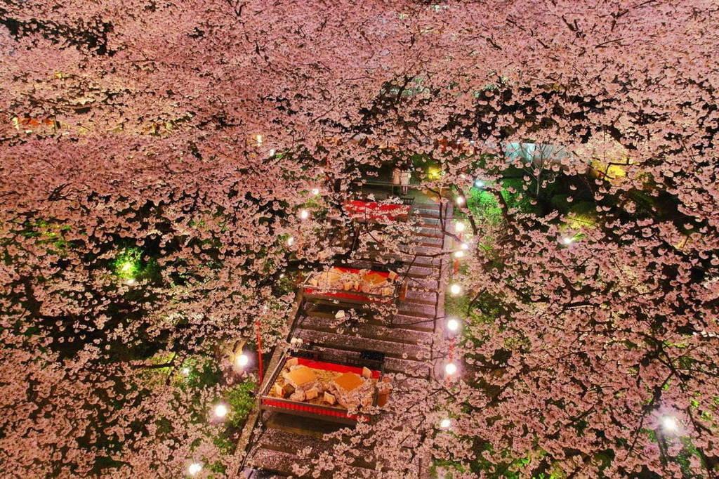 Tumblr(Photo)Updates | 「高輪 桜まつり2019」東京・品川で - 約210本の桜が日本庭園に、桜の下でこたつ&花見料理  http://bit.ly/2CyEjBtpic.twitter.com/ZJaCFbtiJc