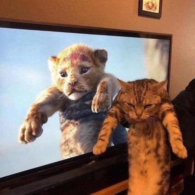 Claudia Oltean's photo on #Caturday