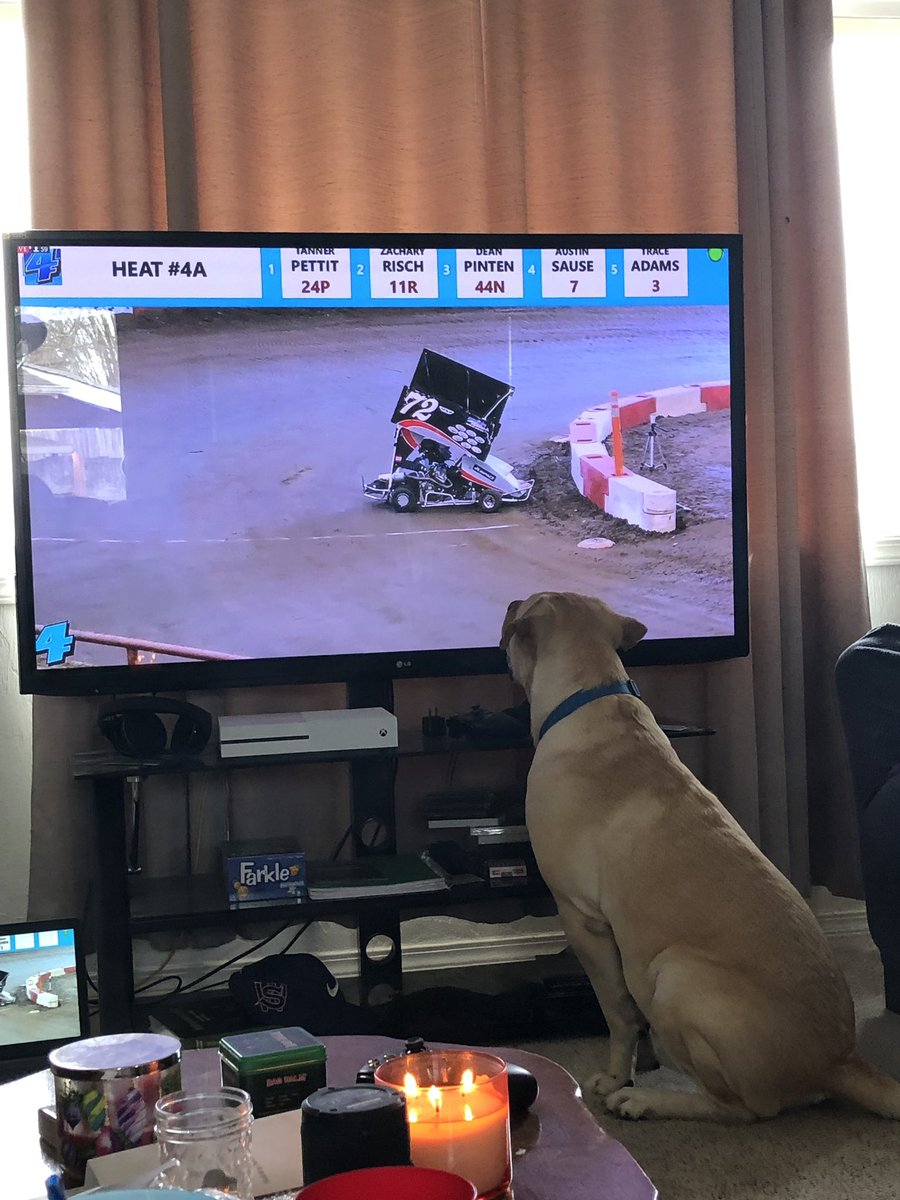 Maverick loves @fastfourmedia - I think we have a racetrack dog 🏁🐾