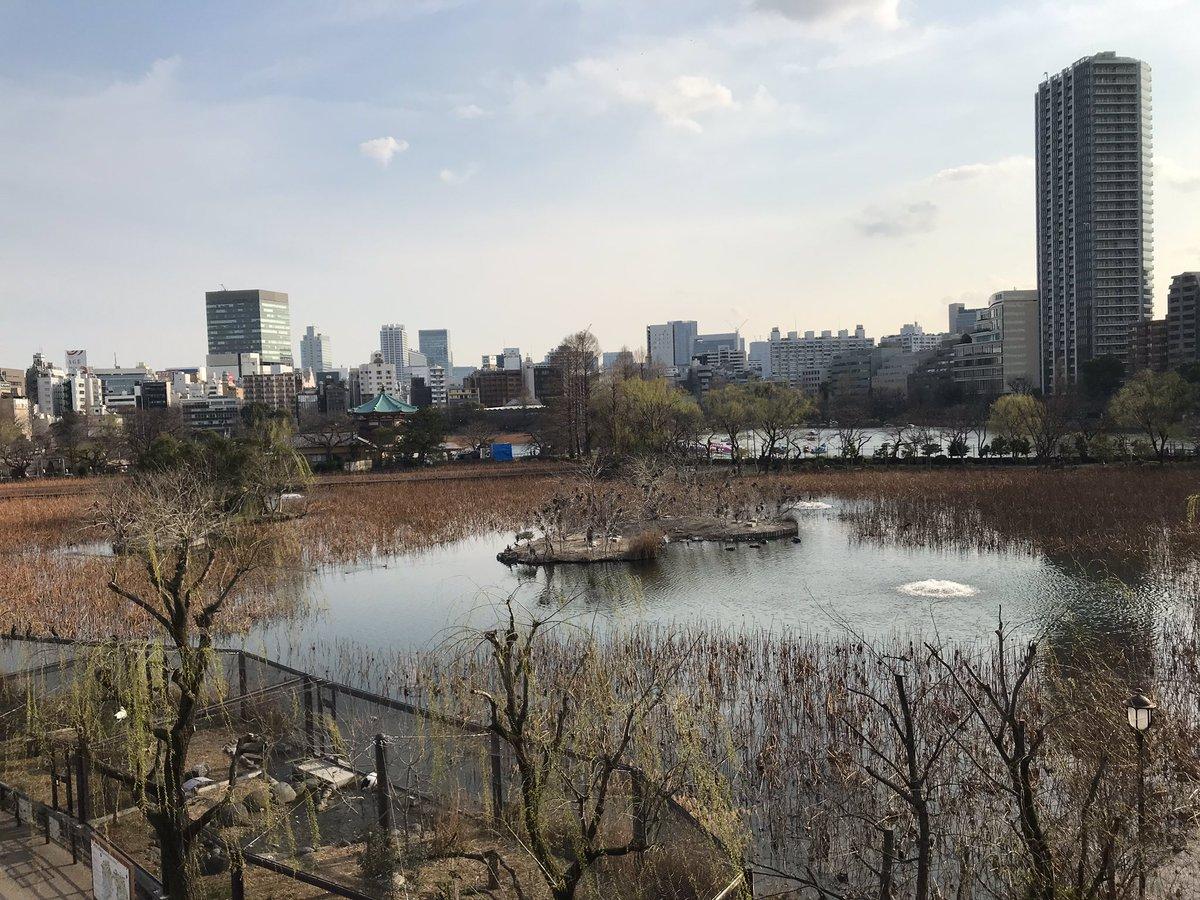 Parc de Ueno et premier cerisier en fleur