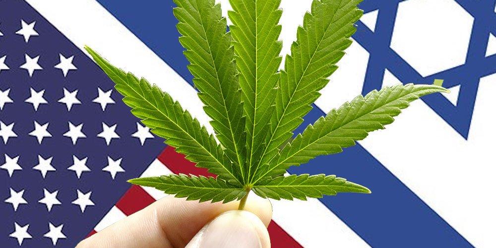 美国政府已资助以色列大麻研究五十年