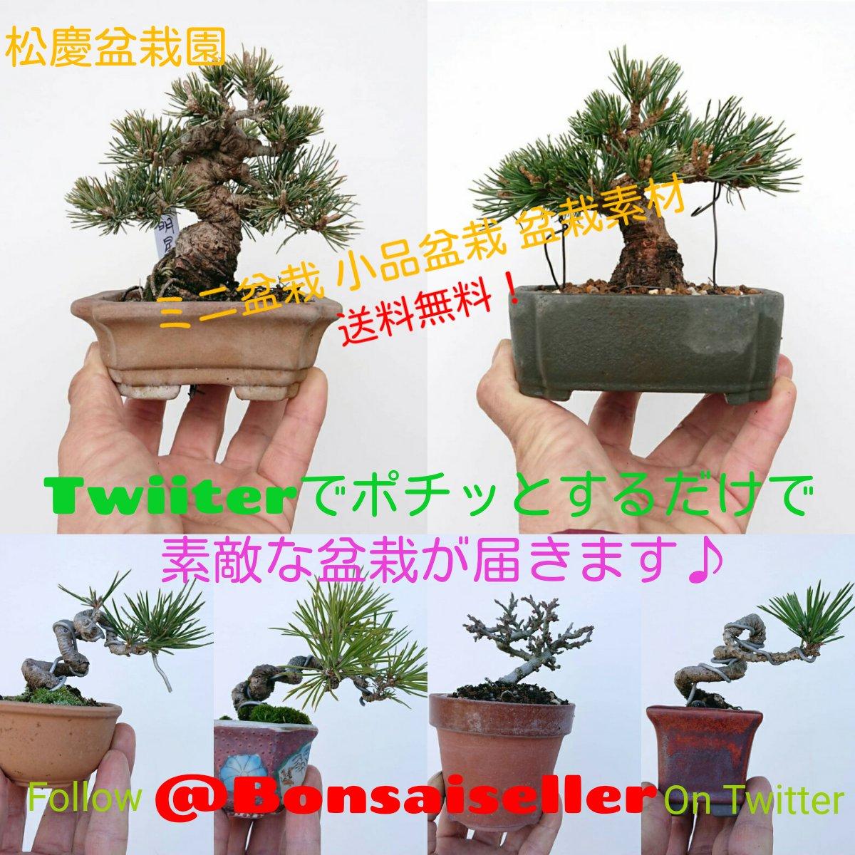 ポチッとな♪  (@Bonsaiseller) https://twitter.com/Bonsaiseller?s=09…  可愛いミニ盆栽からおしゃれなアクセント小鉢まで。 見ているだけでも楽しい品揃え♪  #盆栽 #盆栽販売 #heysoi #bonsai #bonsaiforsale #bonsailife #松慶盆栽園 #花折松慶