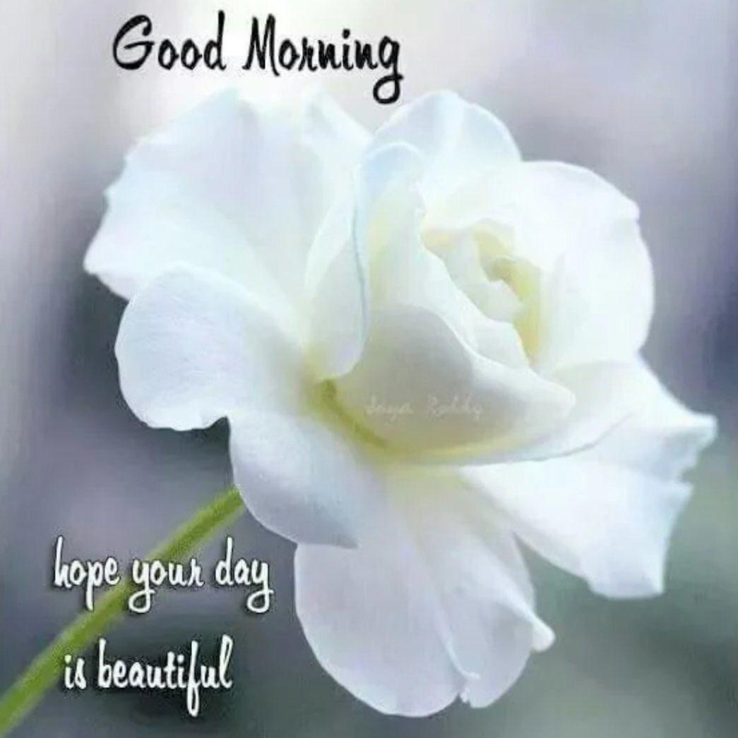 Enjoy a beautiful Sunday!🌹
