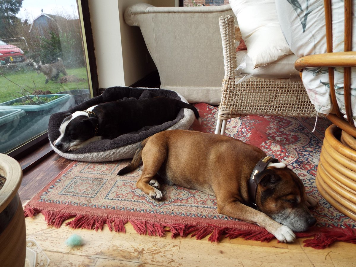 Look lively boys. #WorldSleepDay was on Friday, now you&#39;re taking the pee  #SunPuddle #StaffieSunday<br>http://pic.twitter.com/DxywtfQkia