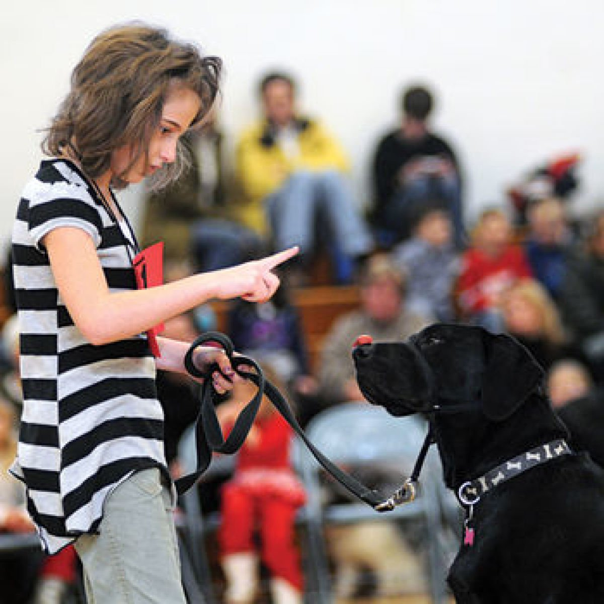 Whats on Appleby in Eden Valley: Easter Dog Show