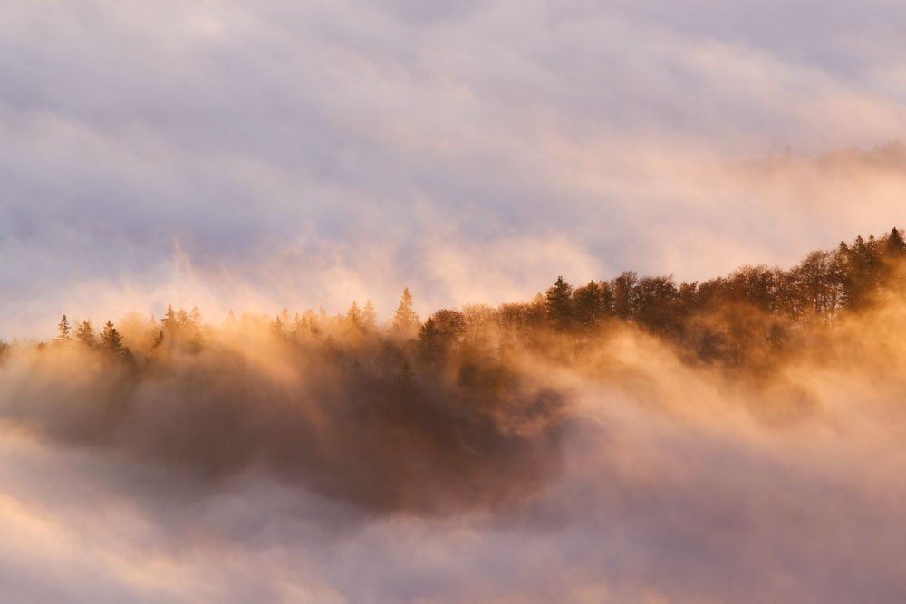 RT @Lukerobphotos: From the top of the Jura mountain on a foggy morning #Switzerland #landscape #PictureOfTheDay https://t.co/GzTRUBqgMG