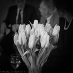 Image for the Tweet beginning: Tulips on this date 8
