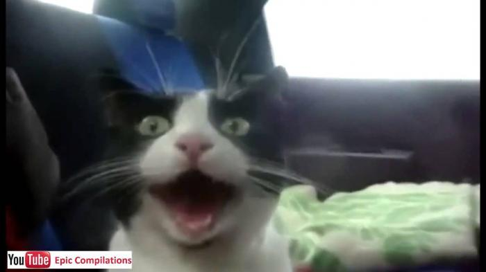 Funny Cats Videos's photo on #Caturday