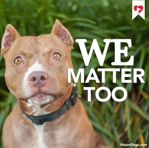 "I am so tired of dogs dying in shelters everyday because of BSL & restrictions in housing for no other reason than how they look. We don't allow racism against humans, we shouldn't allow ""breedism"" against  dogs. They are noble creatures that deserve respect!"