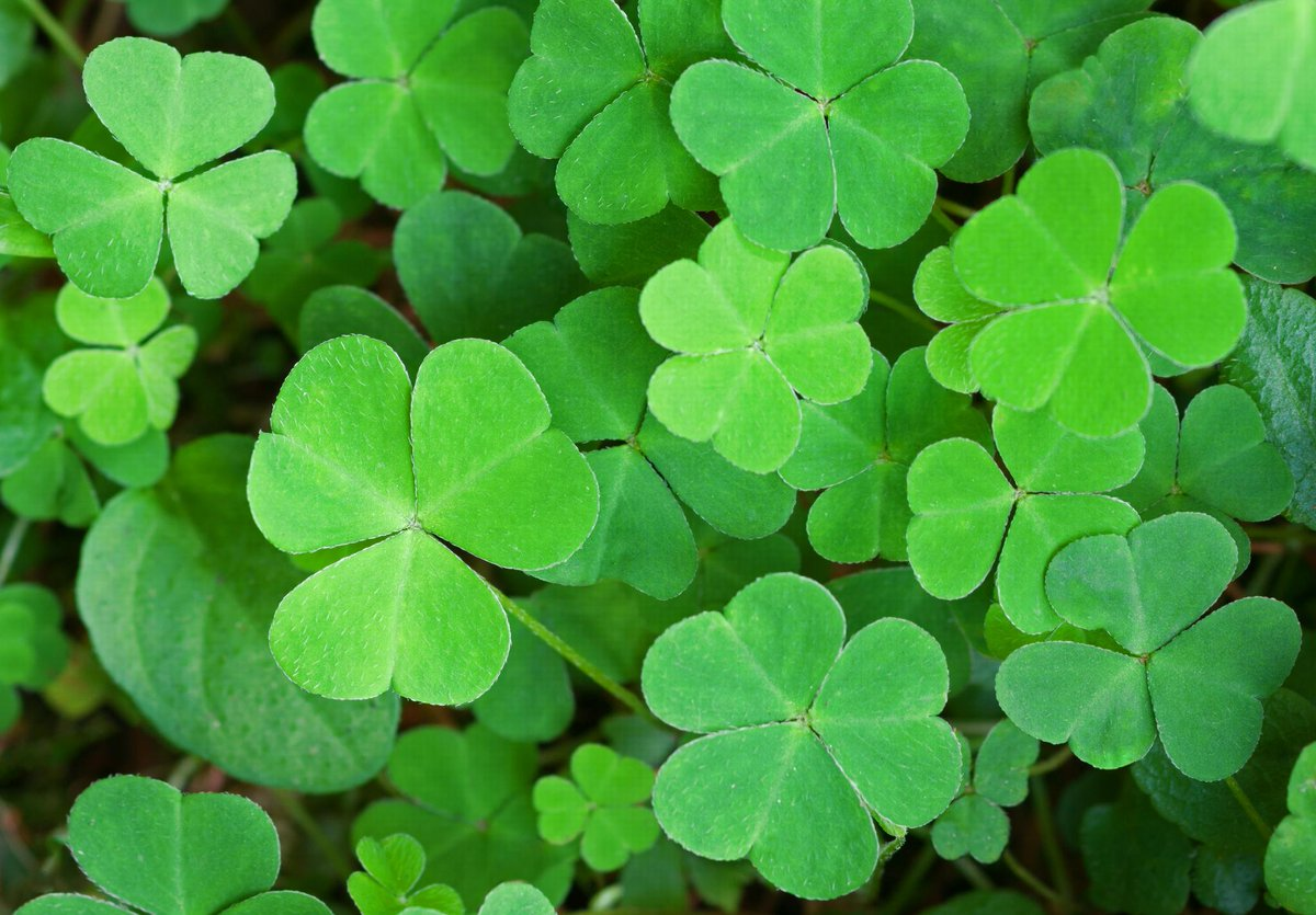 Have a happy and super lucky #StPatricksDay!