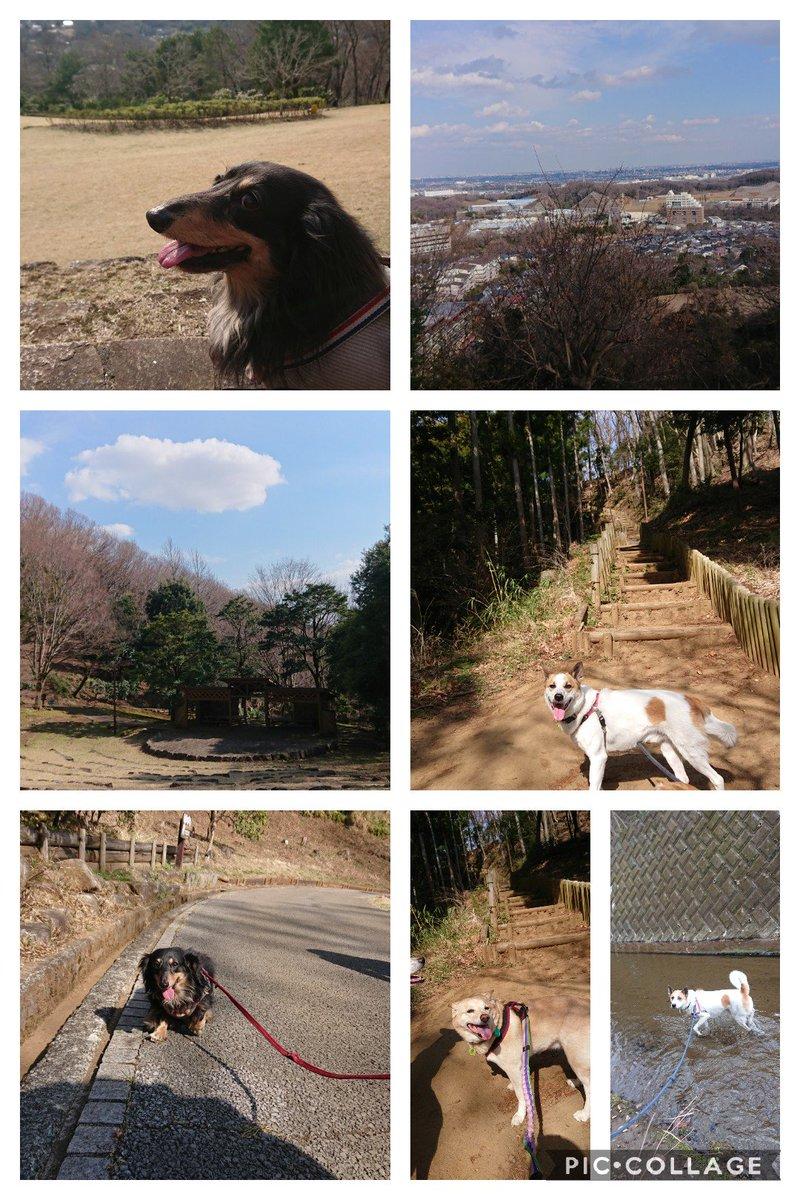 厚木にある七沢森林公園よかったー! 人は運動不足の人が行くとやばい…うちのダックスは階段全部抱っこしたけど小型犬のわんこは大変かも?でもそんなに人も犬もいなくて犬苦手な子も行きやすいかも 3時間ほどかけて全部まわれた!いい散歩コース #厚木市 #七沢森林公園 #犬とお出かけ pic.twitter.com/ZuuycXhOwI