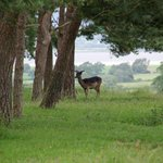 Join South Cots on Wednesday. Might even see deer in the Deer Park.