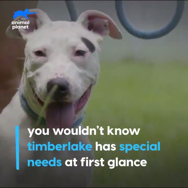 He may be deaf, but that doesn't mean Timberlake is dumb. See how he learned commands via sign language. #PitBullsandParolees