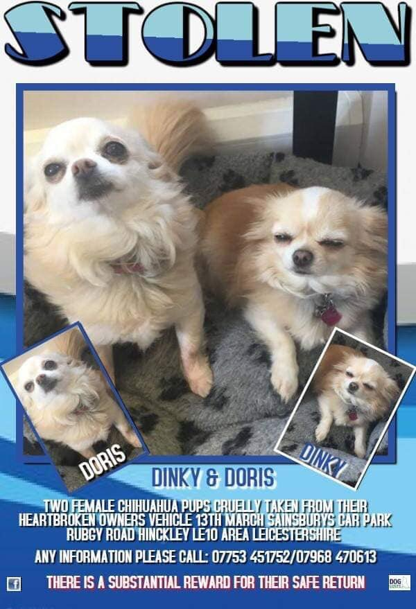 Facebook-Bring Dinky n Doris HomeTwo Female Chi's Missing since 13/3/19Where Is Dinky n Doris Please? <br>http://pic.twitter.com/ZdAwzhKSze