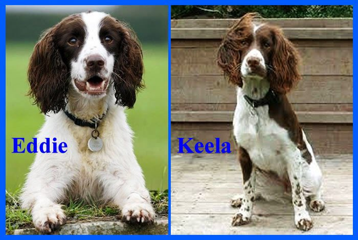 On Twitter Meet Eddie And Keela They Are Cadaver Dogs