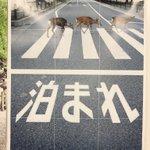 梅田駅に貼られた奈良の観光ポスターー!必死にも程がある!