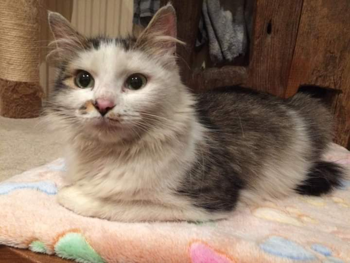 #kittyloafmonday news, we&#39;ve homed Kitty and Luke over the weekend!! So, so happy for you guys!!!! #AdoptDontShop #Hurrahforhomings #lovely<br>http://pic.twitter.com/Jr9XYF4PYp
