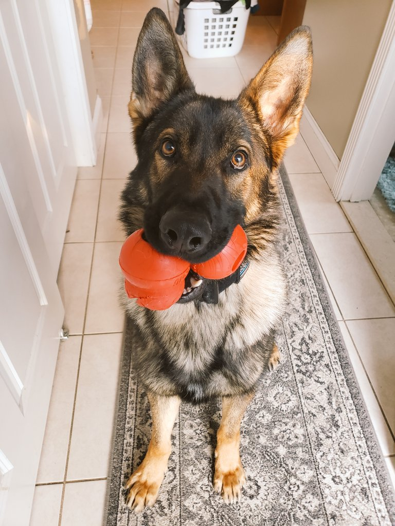 &quot;Come on Dad, We&#39;re going to be late for school&quot;.  K9 Garry is ready for another week of patrol school. #livepd #LivePDNation #LivePDBingo #PartnersInCrime #k9soflivepd #warwickripd #workingdog #LivePDFantasyLG<br>http://pic.twitter.com/MJSUZc0Zdc