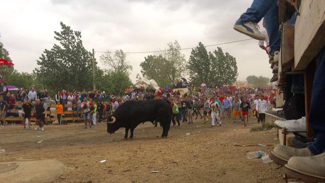 eldiario.es's photo on Toro de la Vega