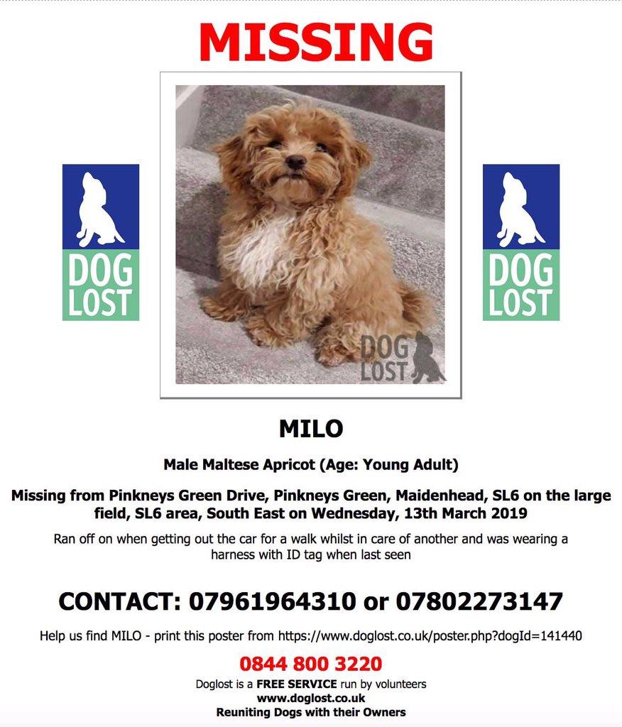 Facebook-FIND MISSING MILOMale Maltese Missing since 13/3/19Have You Seen Milo Please?@missingdogs155 @veryluckypugs @gelert01 @rosiedoc666 @rosieDoc2 @Dizzywizz2 @berternieappeal @RachaelB100 @suedaycam @jaynecellison @MissingPetsGB @DoglostUK<br>http://pic.twitter.com/PgEyWd8xsx