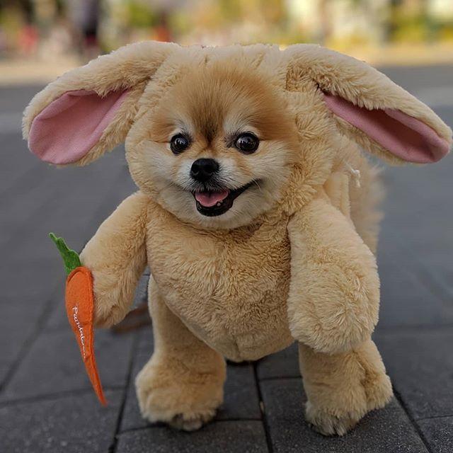 3cf1901c80f9f8  Pandaloon  bunnycostume  smalldogs  pomeranian  pompom  eastertime   easterholidays  … https   ift.tt 2Hs6Uw3 pic.twitter.com ytLdE68mee