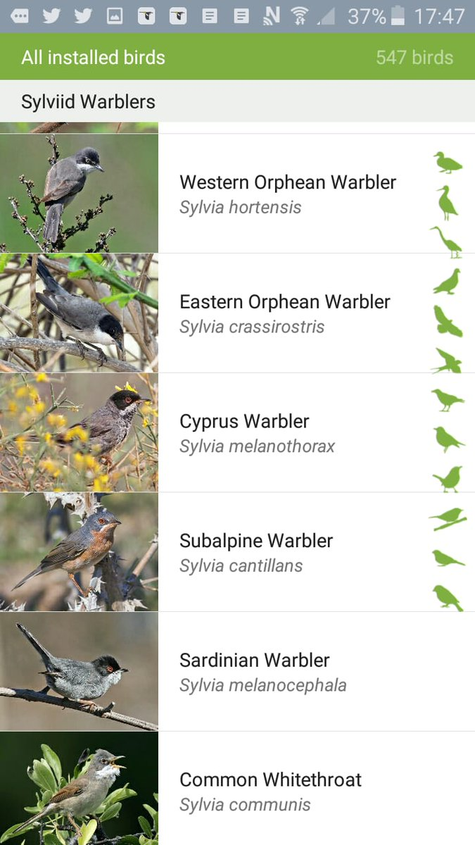#Birding in the Med this spring? Want free bird ID tools? New @MerlinBirdID pack for Israel by @yoavperlman now available and Iberia already covered.
